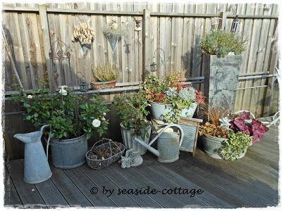 Nice Seaside Cottage Winterbepflanzung GartenStrandGarden