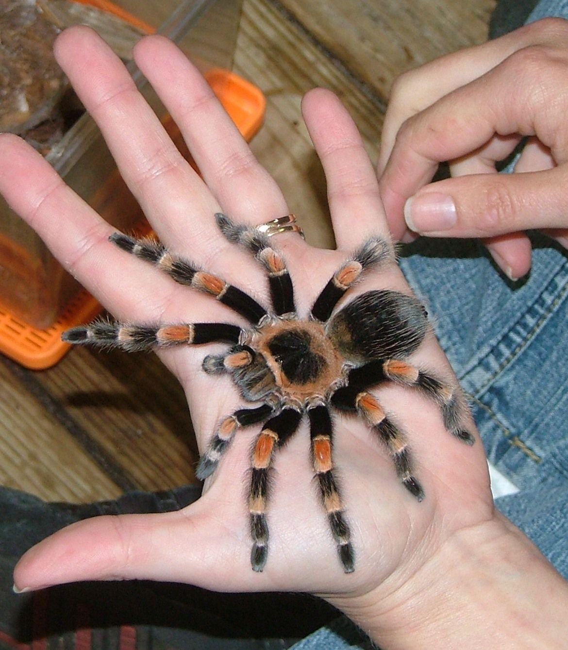 Pin de Jessie Muller en Animals | Pinterest | Araña, Insectos y ...