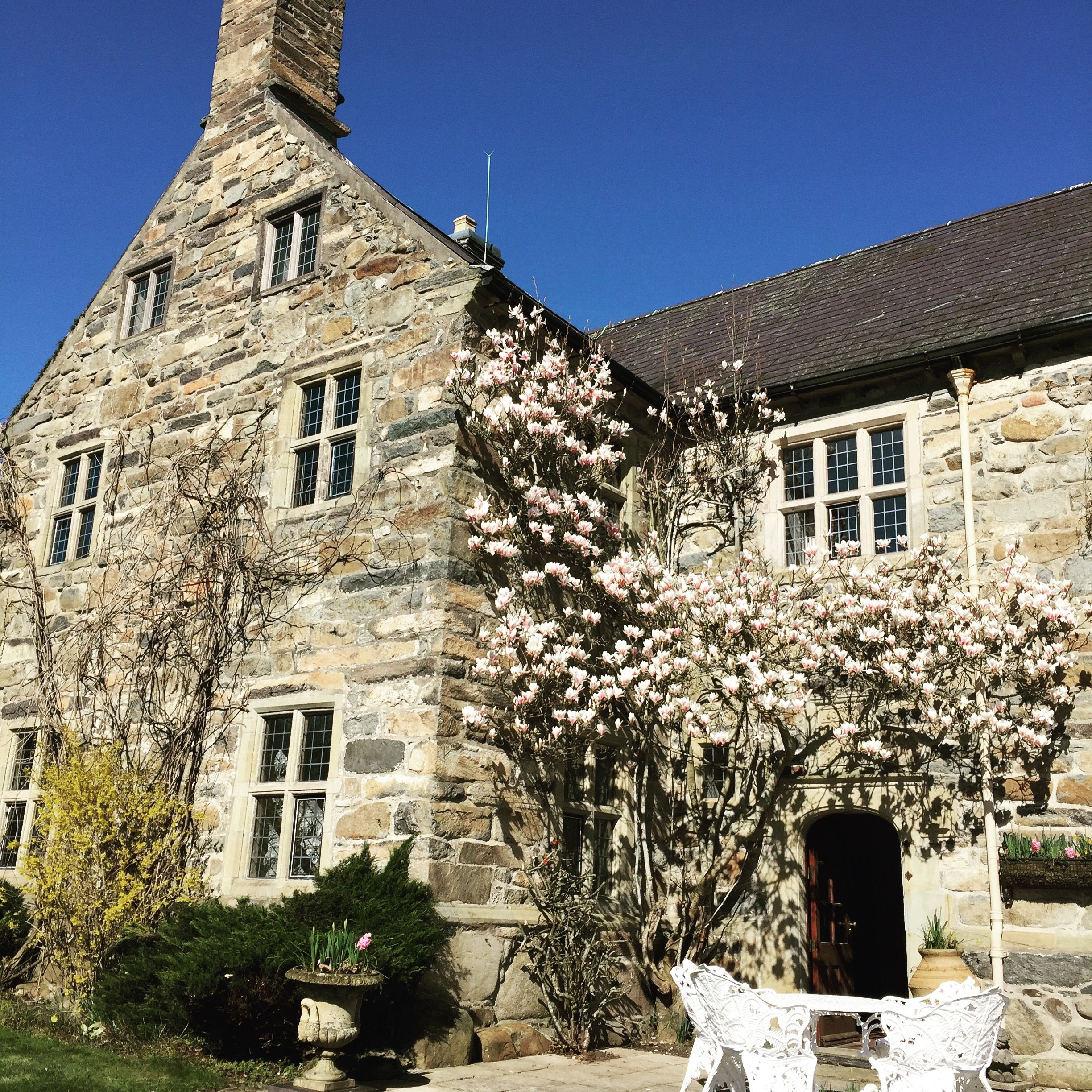 Magnolias In Bloom At Talhenbont Hall North WalesWelshWedding
