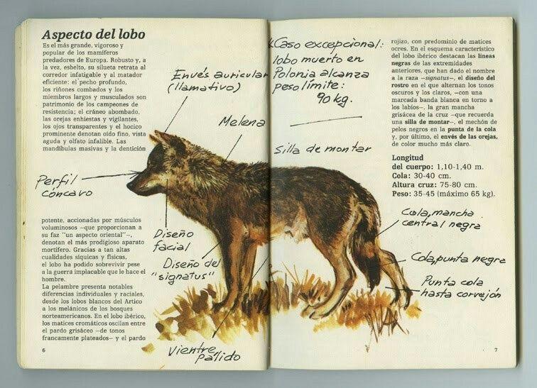 Cuadernos De Campo De Félix Rodríguez De La Fuente Felix Rodriguez Ave De Presa Felix