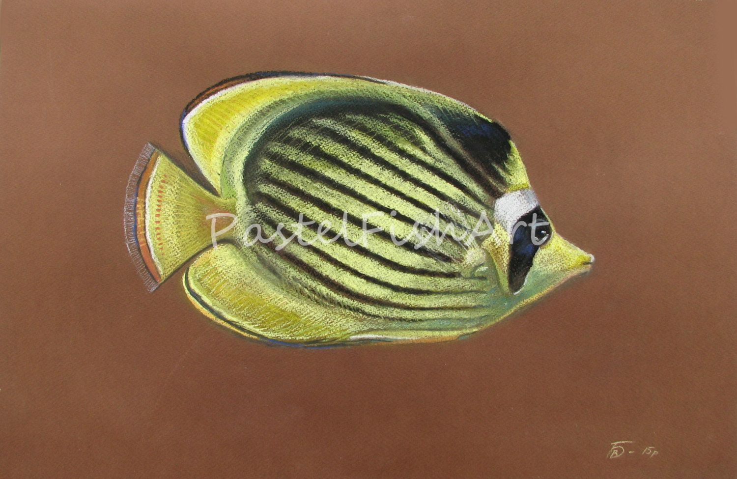 Оriginal Pastel Fish Picture Raccoon Butterfly fish Coral Fish Tropical Fish Caribian Fish Home decor Wall Decor Art Homeliness by PastelFishArt on Etsy
