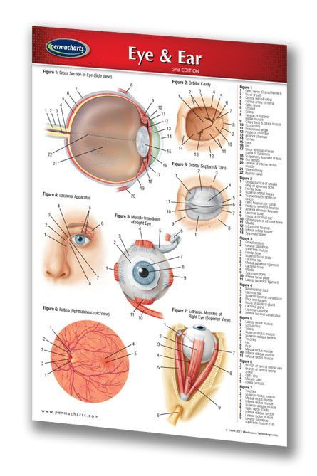 Eye ear medical pocket chart quick reference guide 4 x 6 laminated ccuart Choice Image