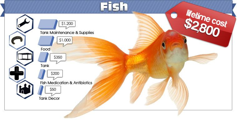 On average the cost of owning a fish is more than 10