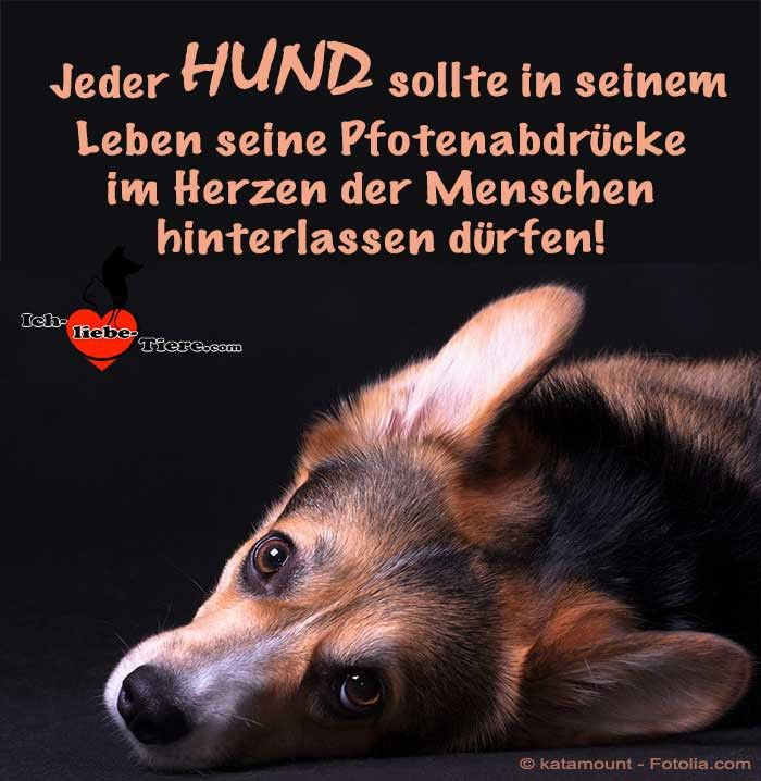 Jeder Hund Sollte In Seinem Leben Seine Pfotenabdrucke Im Herzen Der Menschen Hinterlassen Durfen Hunde Spruche Tiere Hundespruche