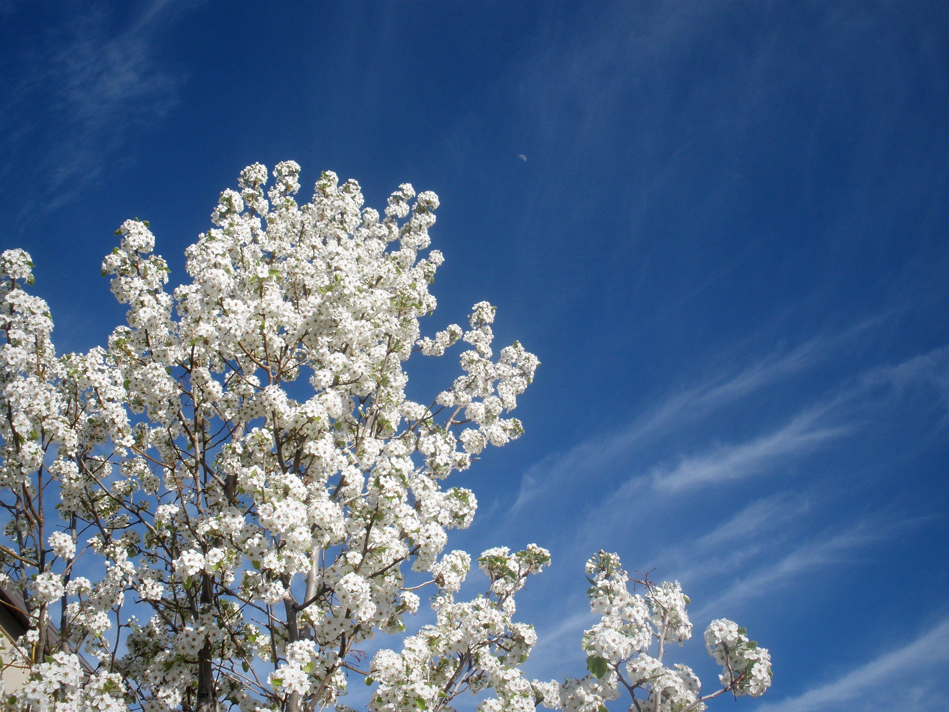 Blossomed Sky