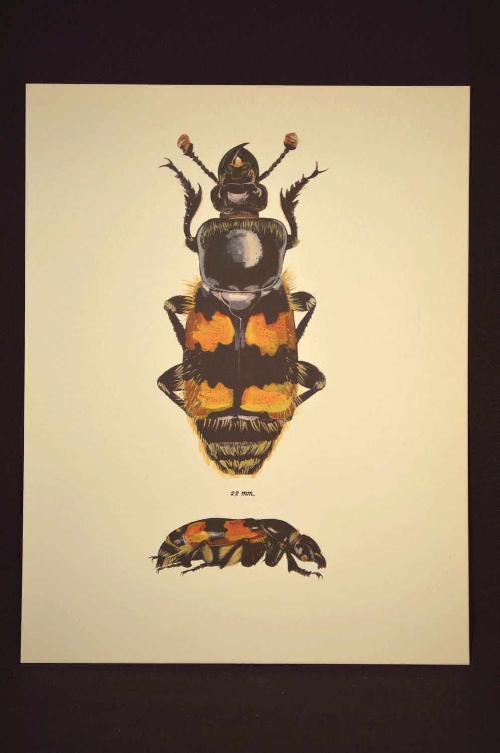 Bug Print Beetle Wall Decor Art Insect Nature Vintage | Nature ...