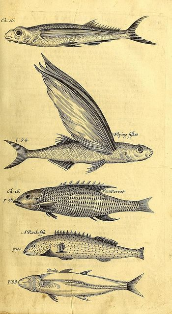 Plates From A History Of The Carriby Islands 1666 Pinterest