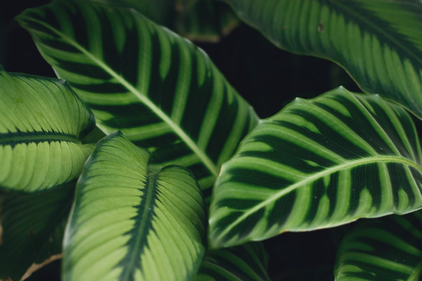 20 Plants That Improve Air Quality In Your Home With Images
