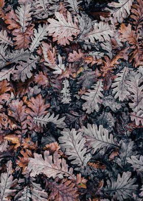 Metal Poster Dried Ferns