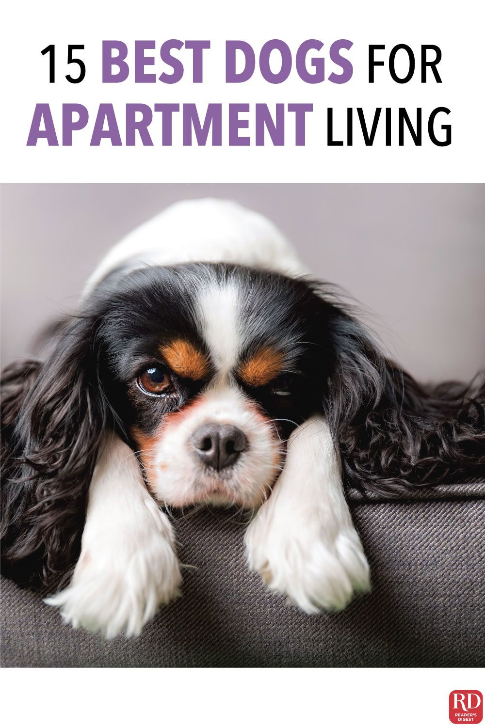 The 15 Best Dogs For Apartment Living If You Re Looking To Adopt A Furry Friend And Want To Make Sure They Re On Apartment Dogs Best Apartment Dogs Best Dogs