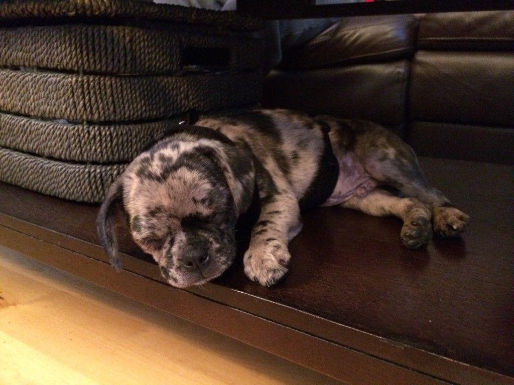 Baby Hank Is Home Puppy Love Puppies New Puppy