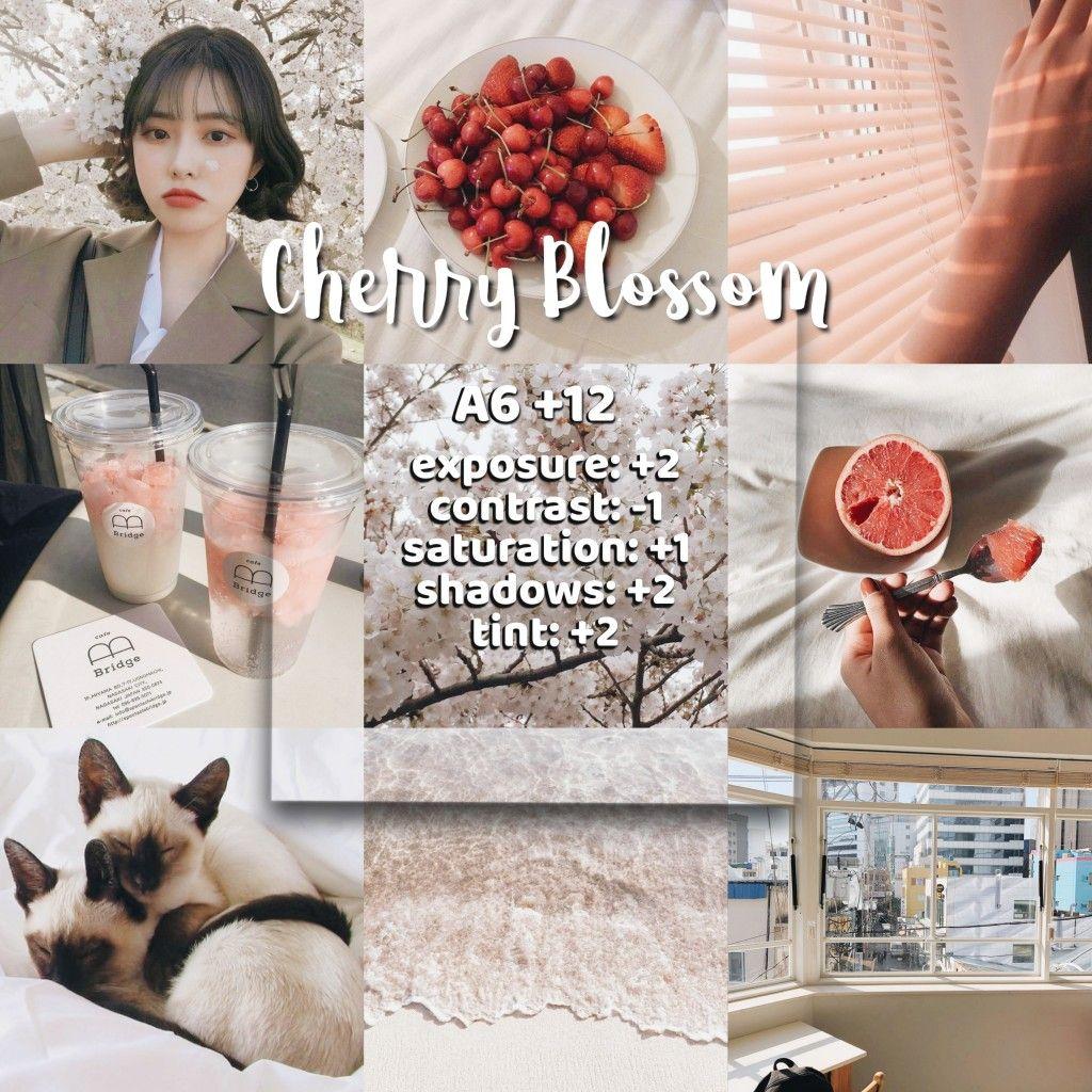 Cherry Blossom Vsco Filter Vsco Filter Vsco Filter Instagram Vsco Photography