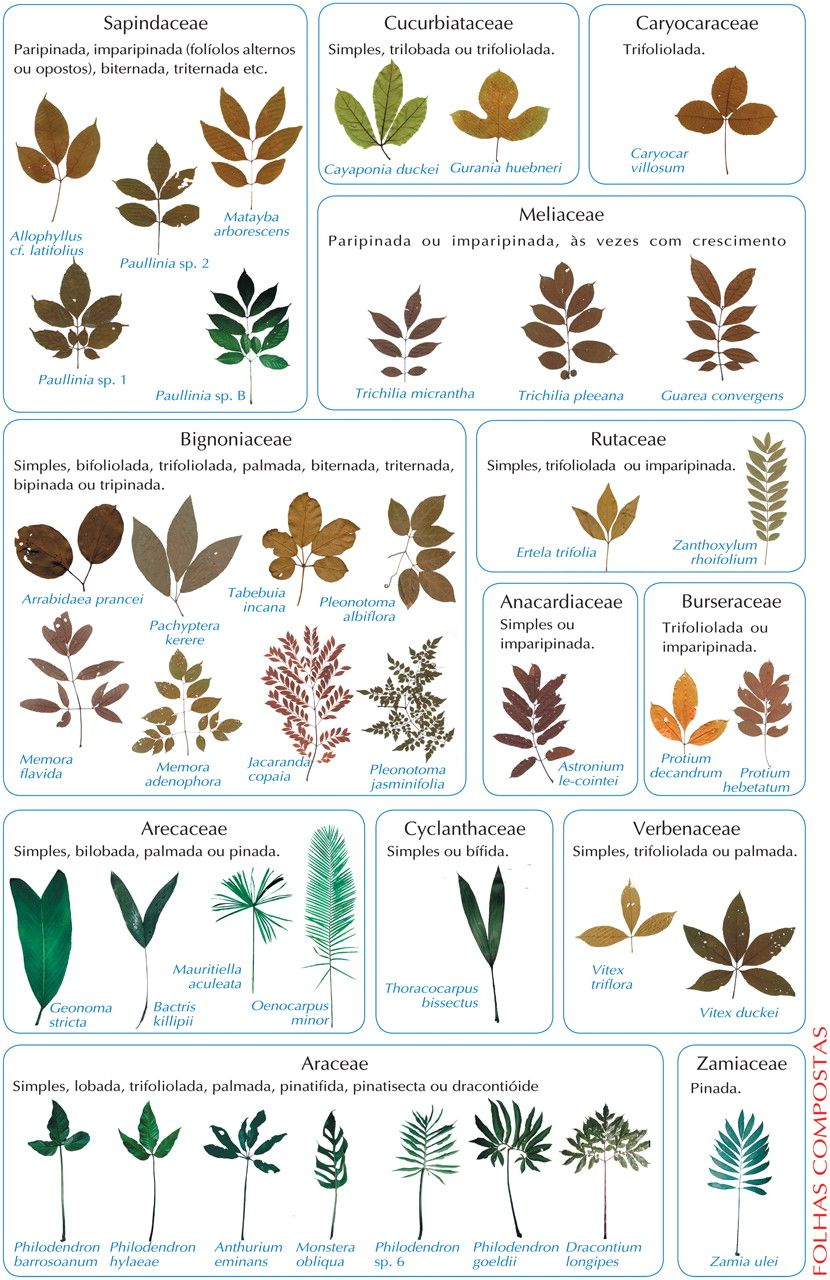 Plant Identification By Leaf Chart