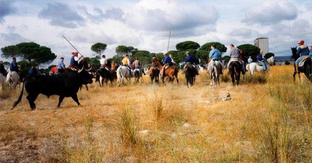 El Blog de la Loles Independiente 2: Otra fiesta bárbara en España