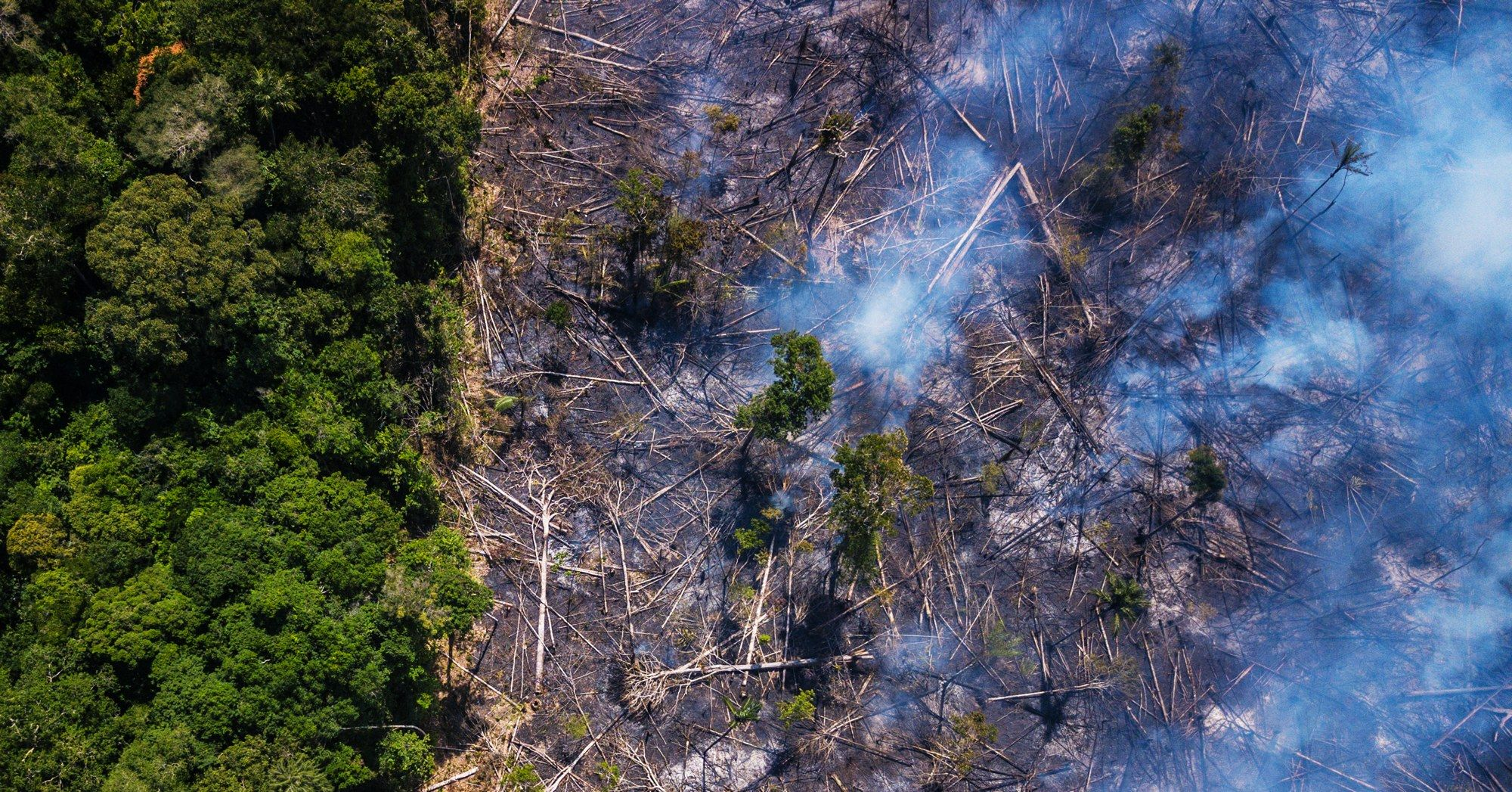 Deforestation Is Fueling The Amazon Fires And We Can Easily Nail