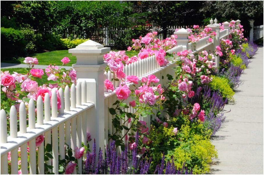 Gambar Pagar Bunga Gambar Bunga Pagar