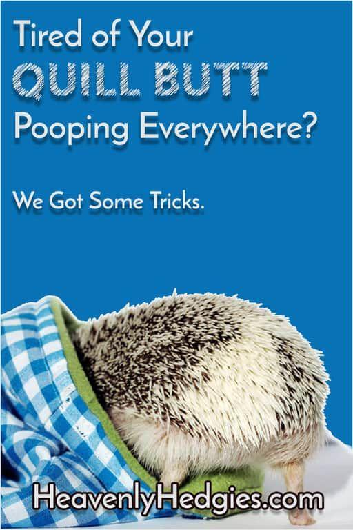 How to Litter Train a Hedgehog Hedgehog care, Hedgehogs