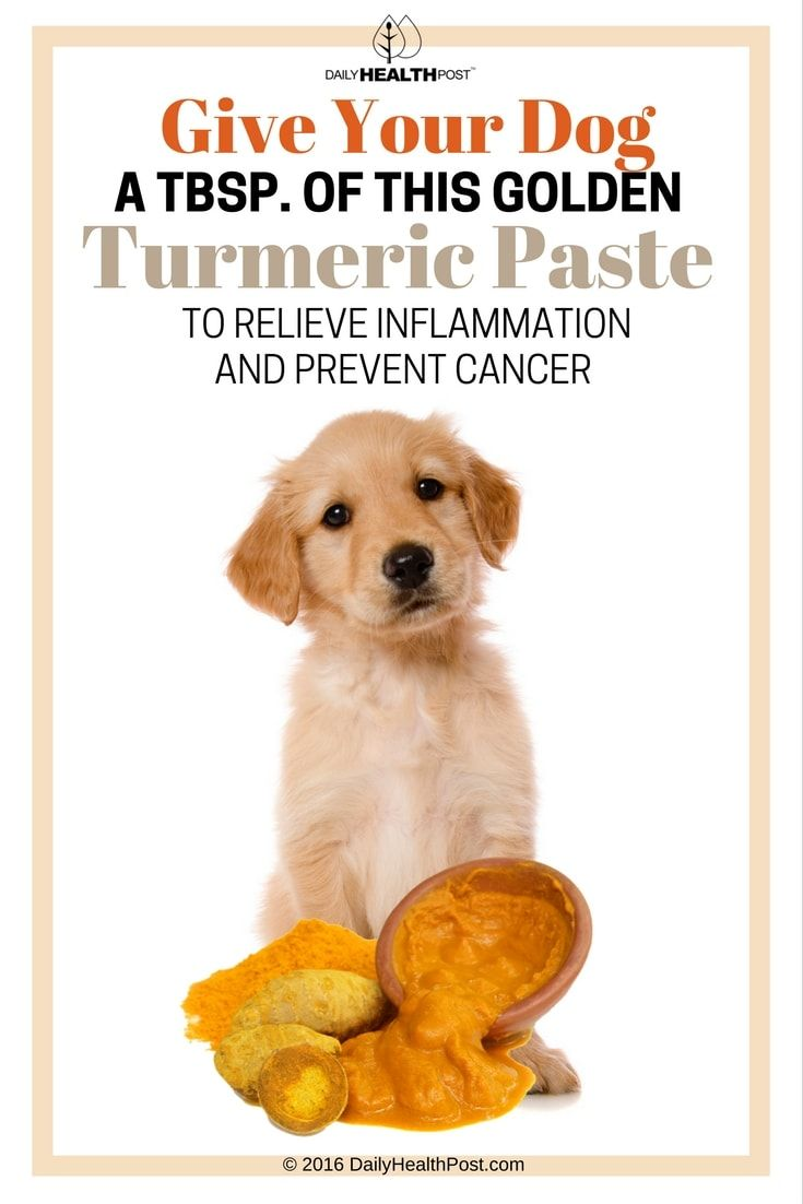 Cancer herbs for dogs - Give Your Dog A Tbsp Of This Golden Turmeric Paste To Relieve Inflammation And Prevent Cancer