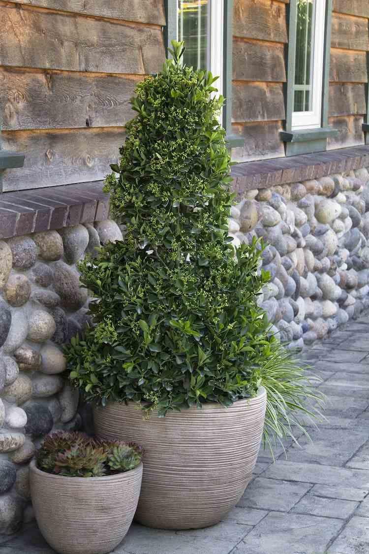 Arbuste Persistant En Pot Plein Soleil top 10 des arbres en pots à cultiver sans difficulté et