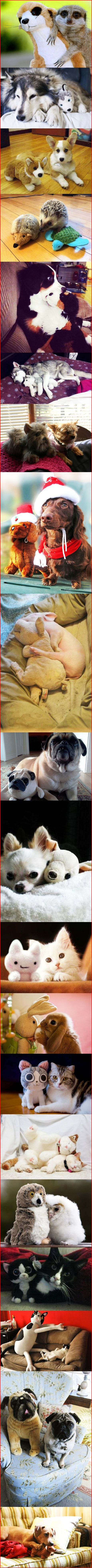 Animals with their own stuffed animal version of themselves! Cute overload, made my day!!