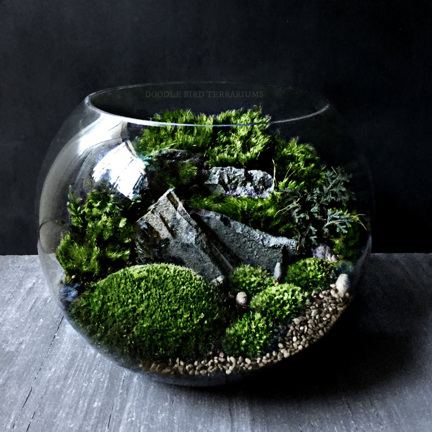 Bio-Bowl Forest World Terrarium with Live Woodland Plants - 4 Sizes - Bio-Bowl Forest World Terrarium With Live Woodland Plants - 4