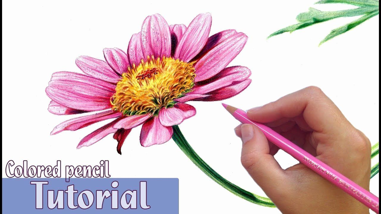 Coloring Flowers with Colored Pencils in 2020 Colored