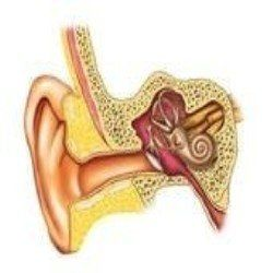 What Is Vertigo And What Is This Thing Called Tinnitus I Don T Consider Myself A Hypocho Inner Ear Infection Symptoms Ear Infection Symptoms Tinnitus Symptoms