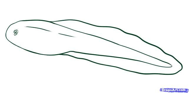 How to draw a tadpole. (Used the finished image as a coloring page ...