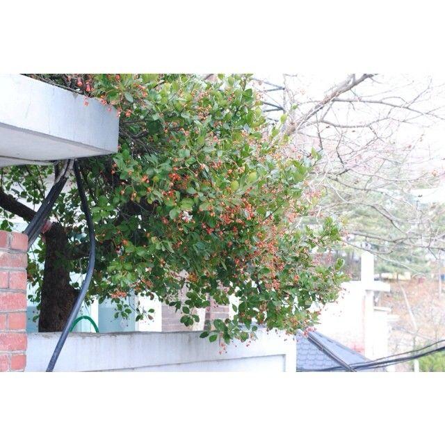 violetwind 시간을 배회하는 게 습관이 된 거 같다. #골목길  / #골목 #식물 / 2013 12 12 /