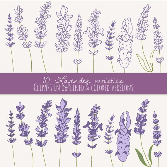 Hand drawn lavender branch and flowers outline vector ... |Lavender Tattoo Outline