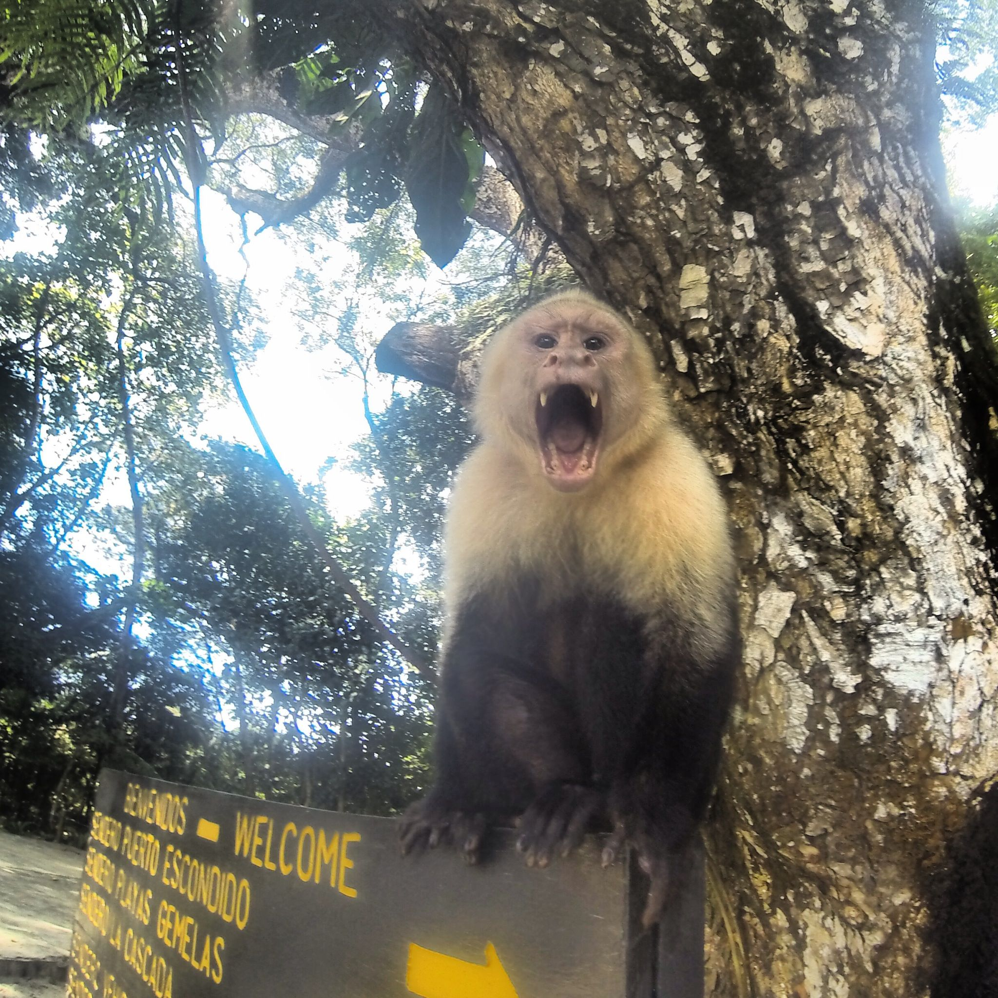 Monkey Visitation Parque Nacional Manuel Antonio Costa Rica