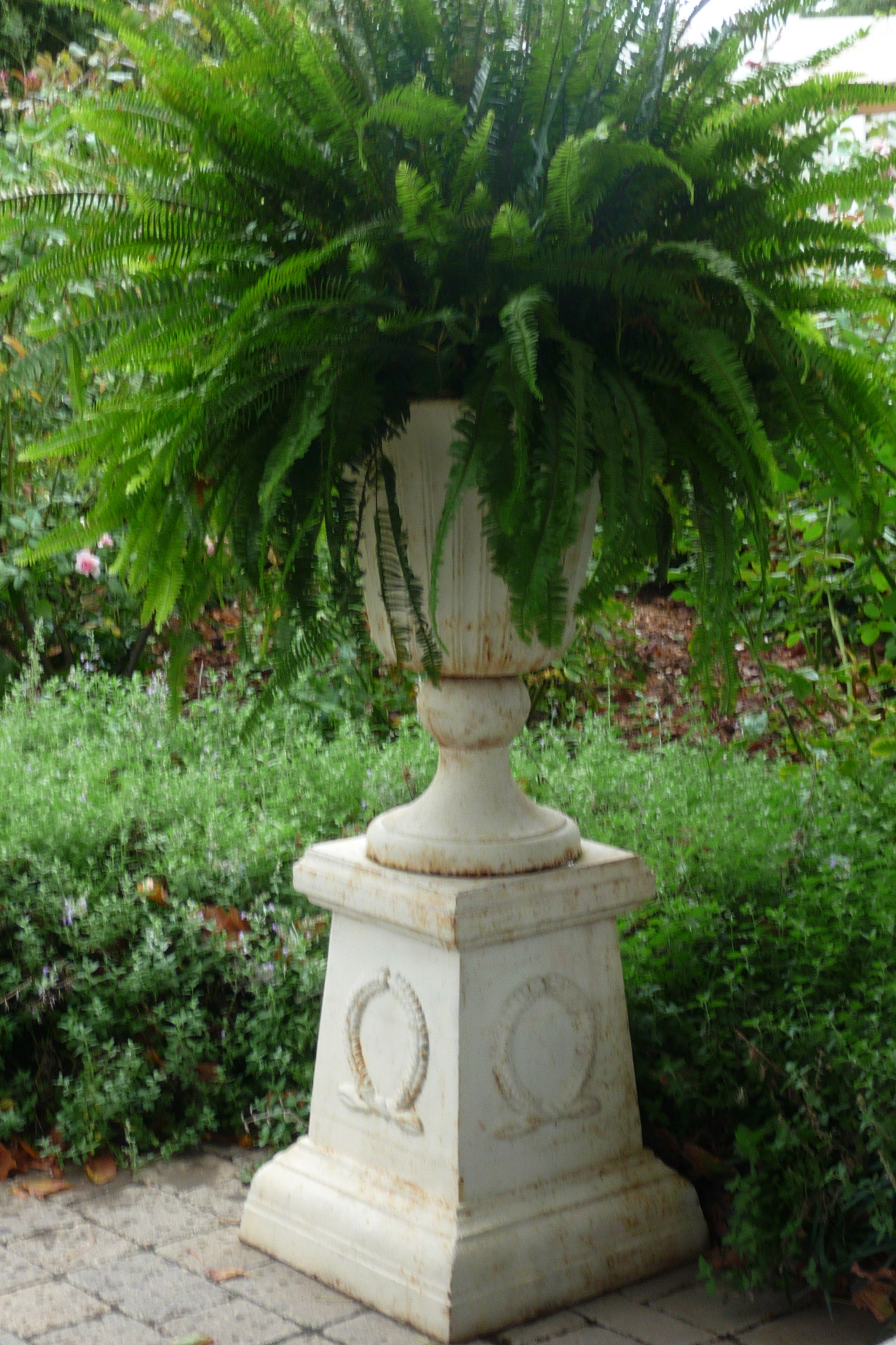 Classic Fern In Cast Iron Urn On Plinth Garden Urns Garden Containers Container Garden Design