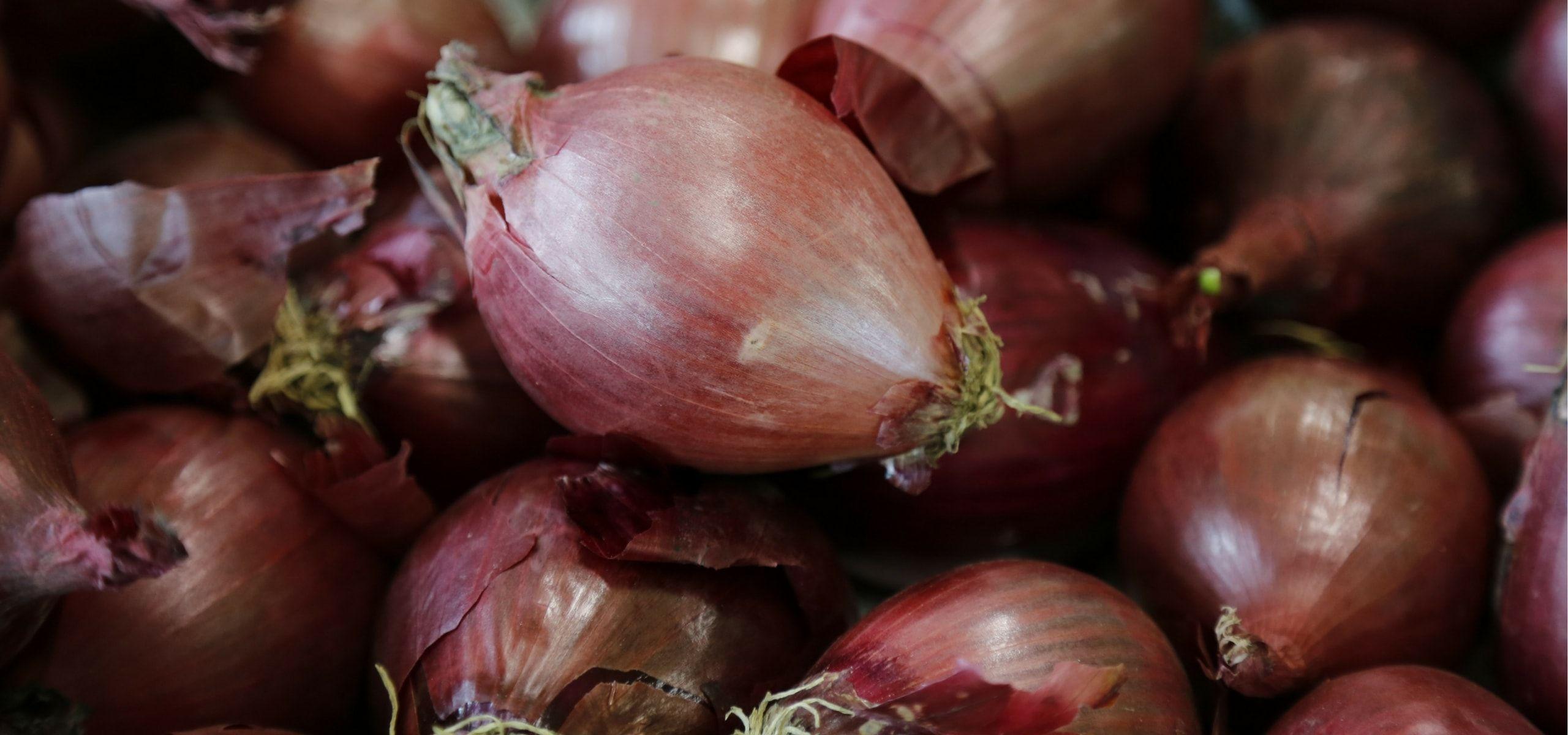 Comment Planter De L Échalote planter l'ail, l'échalote et l'oignon | jardin | planter ail