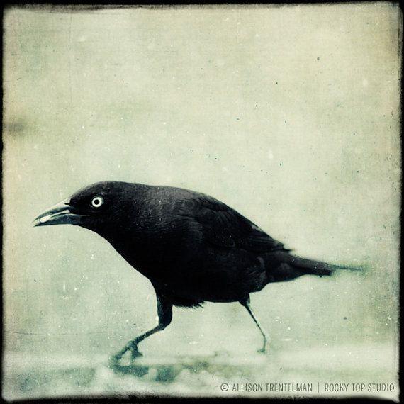 Crow Art Print  Black and White Bird by RockyTopPrintShop on Etsy, $25.00