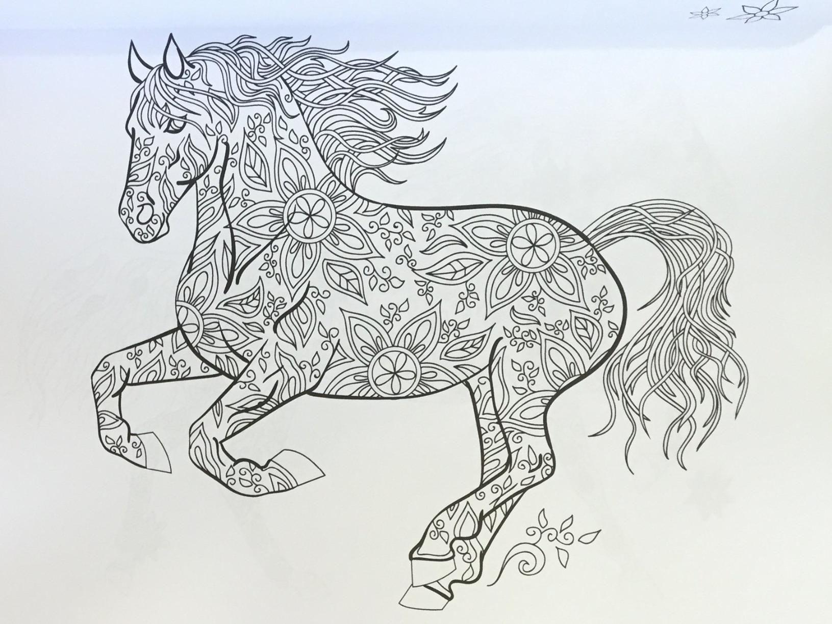 Amazon the wonderful world of horses horse adult coloring