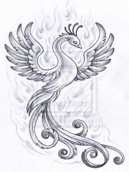 Fenix Desenhos Pesquisa Do Google Desenhos De Fenix Tatuagem