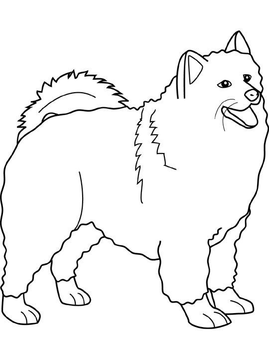 Dog Color Pages Printable Dogs Coloring Pages Samoyed Dogs