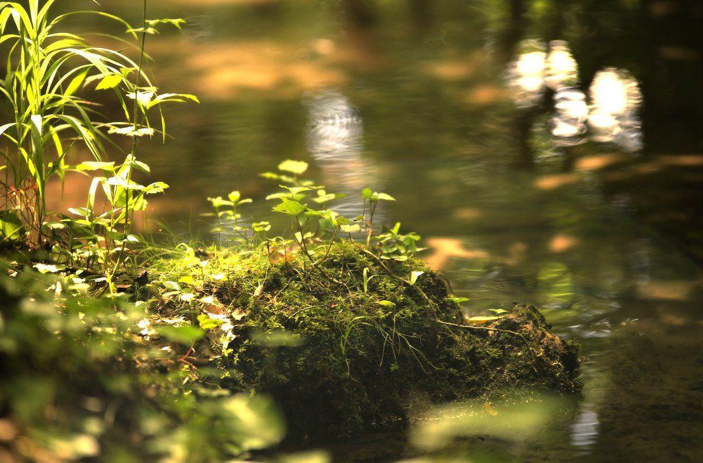 douce lumiere marecage by euphoria59