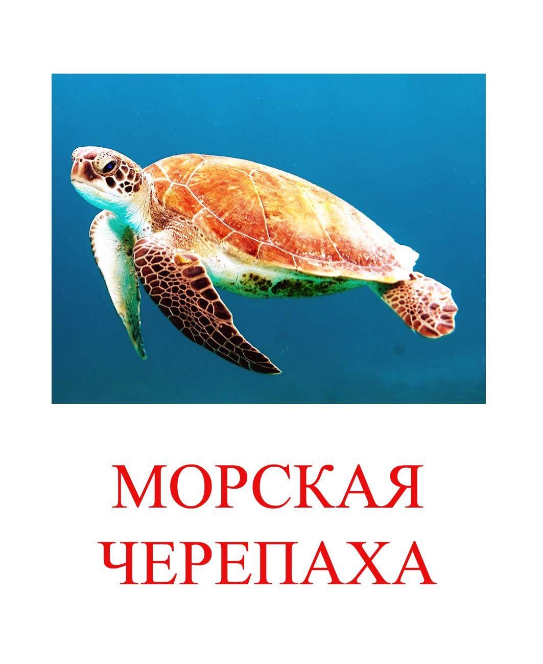 Морские животные картинки для детей   Черепаха, Морские ...