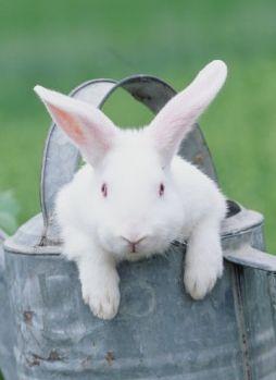 ...and Peter Rabbit hid in Mr. McGregors garden...