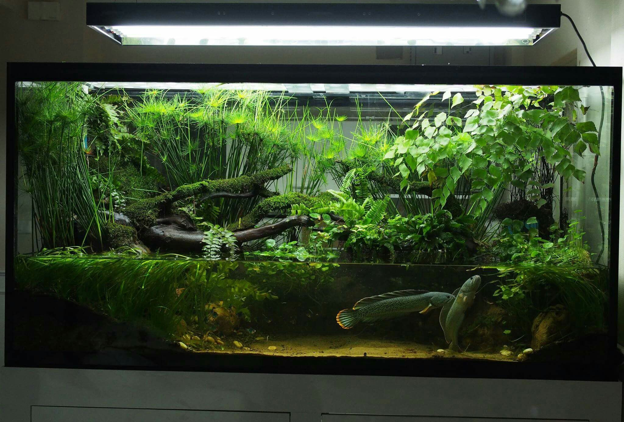 Green Chapter Singapore Paludarium