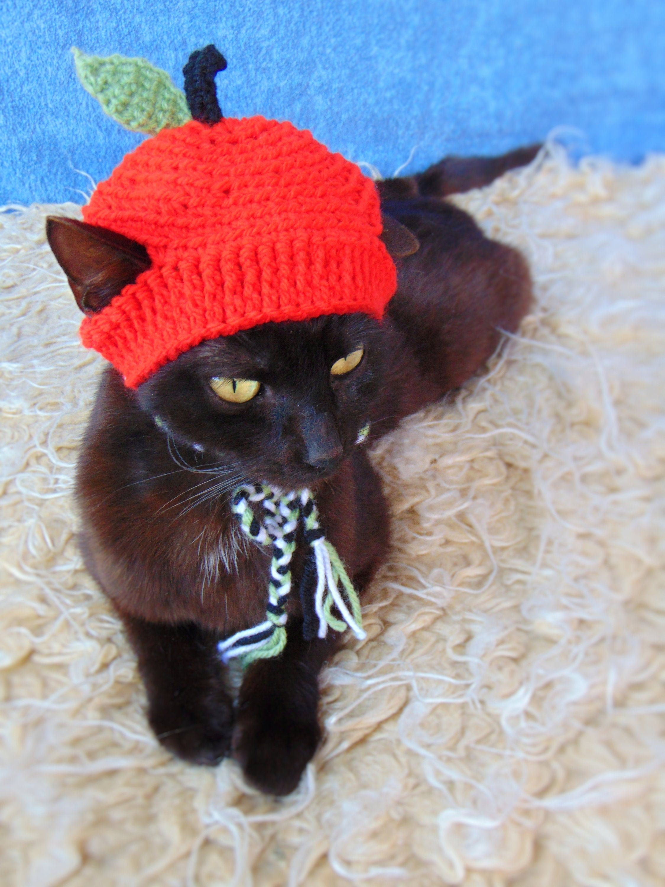 Apple Hat For Cat Halloween Apple Pet Costume Kitten Outfit Cat Accessories Gift For Cat Lover Cat Outfits Pets Cat Accessories Pet Costumes