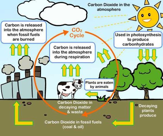 Carbon Cycle Fossil And Cycle For Kids On Pinterest Earth