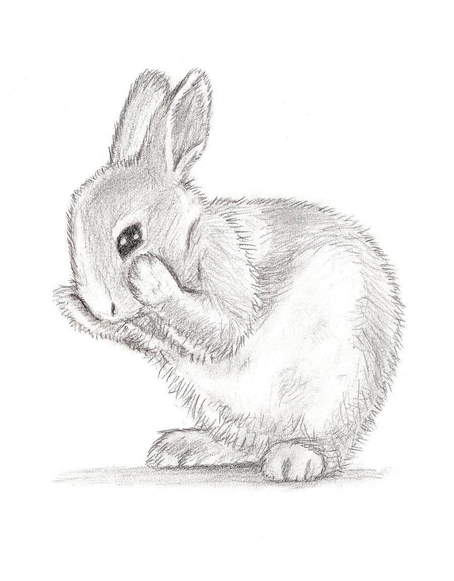 Картинки зайчики для срисовки