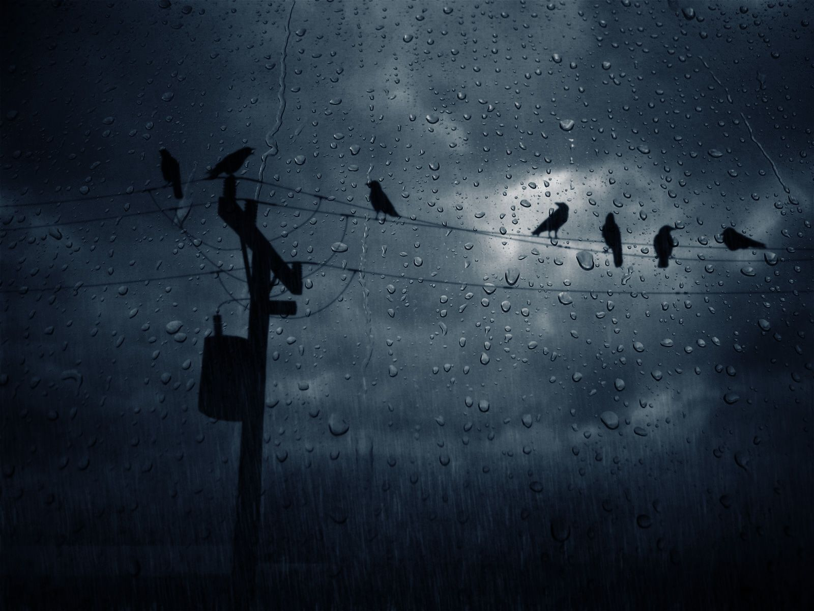 awesome rain birds power lines ravens  - Wallpaper