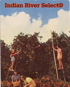 #indianriver #florida #citrus #vintage