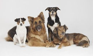 Kill Dog Fleas Quickly With Generic Capstar Flea Treatments ペット
