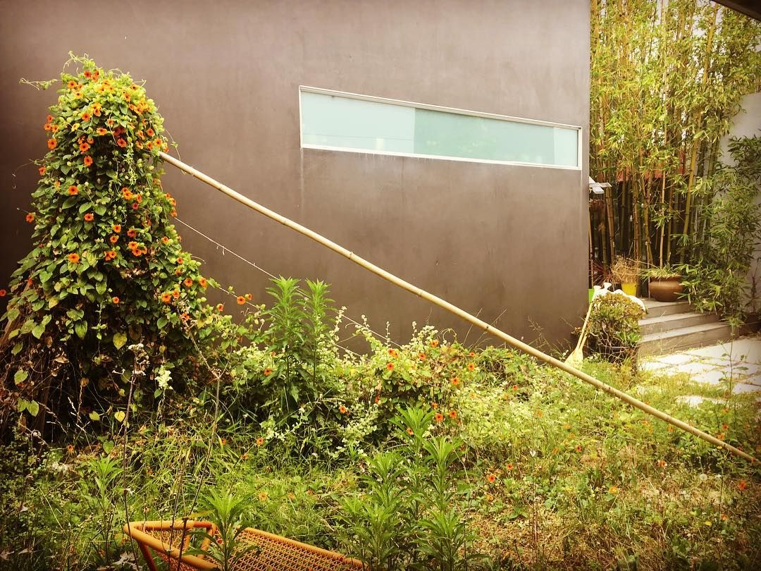 Minor garden setback. Just call me Swamp-Thing | Instagram: MOBILE ...