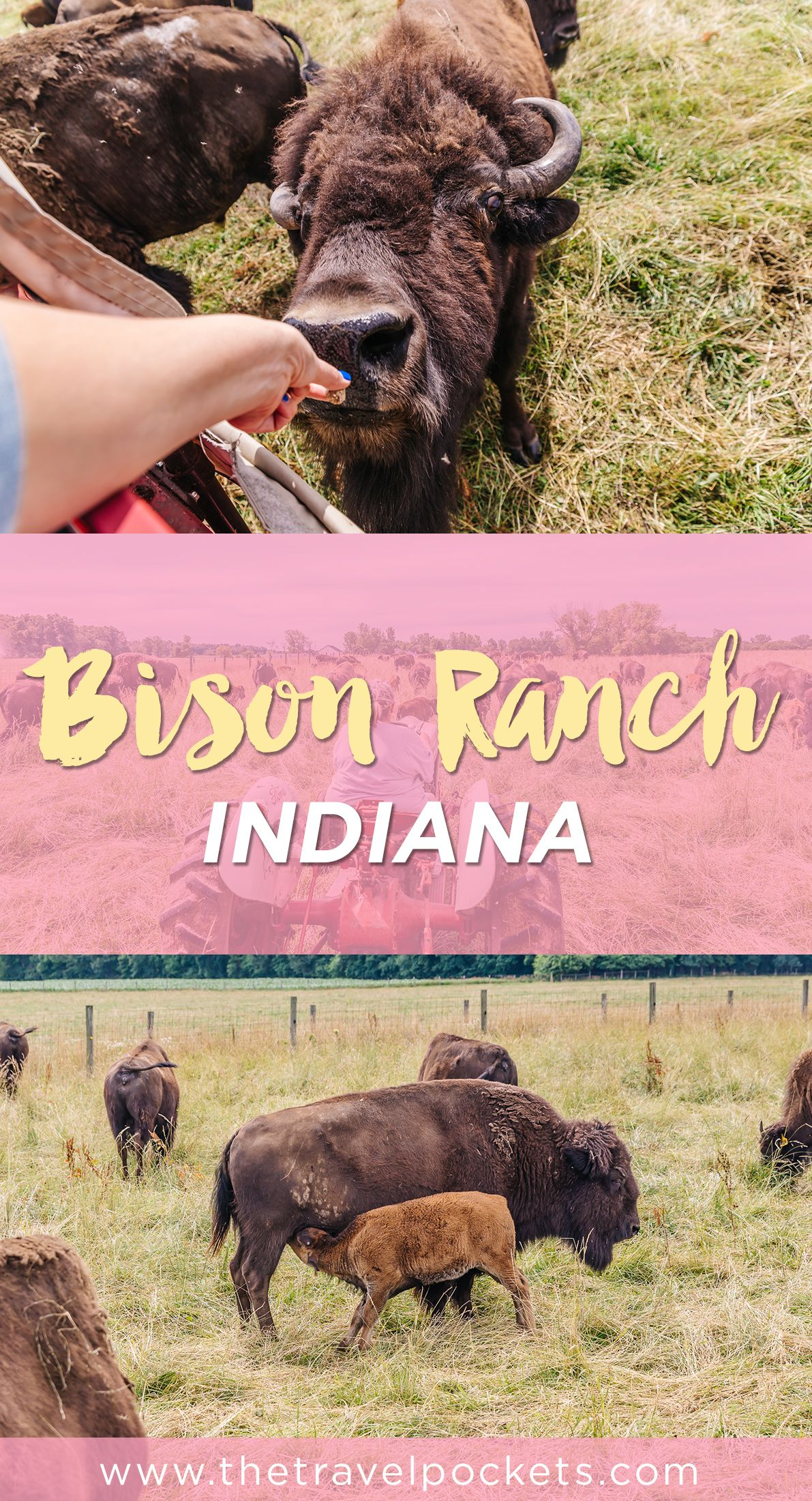 Cook's Bison Ranch In Indiana