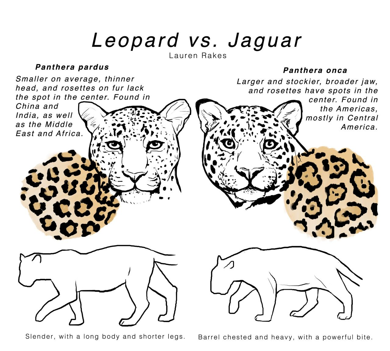 leopard vs. jaguar | Big Cats | Pinterest | Leopards ...